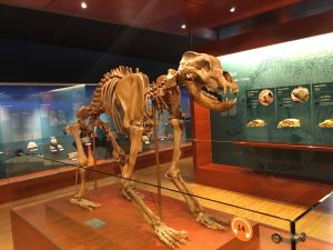 san-cassiano-dolomiten-museum-ladin-ursus-ladinicus