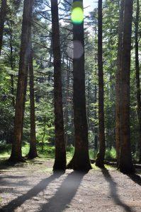 Bäume im Sonnenlicht im parco nazionale d'Aspromonte Calabria Kalabrien
